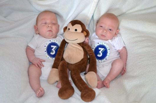 L & Monkey & N